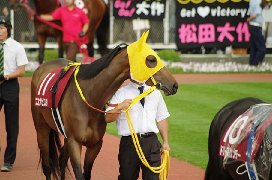 馬連 ワイド