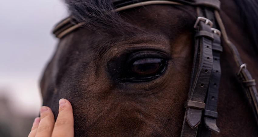 地方競馬と中央競馬の6つの違い