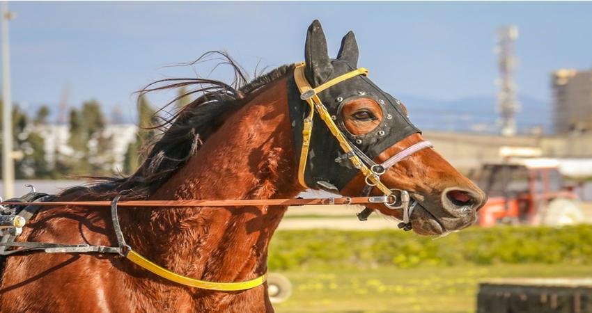 競馬 予想の仕方 軸馬A